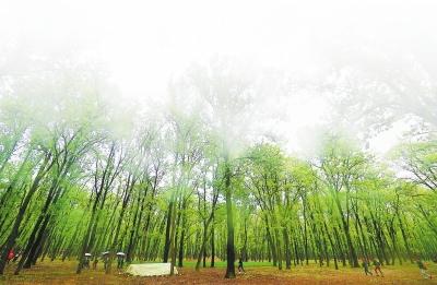 林木葱葱向太阳。