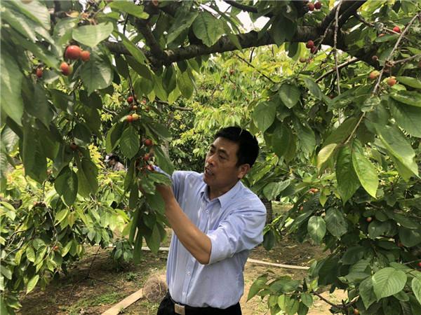 """河南尉氏:""""合作社+基地+农户""""产业发展模式成致富""""聚宝盆"""""""