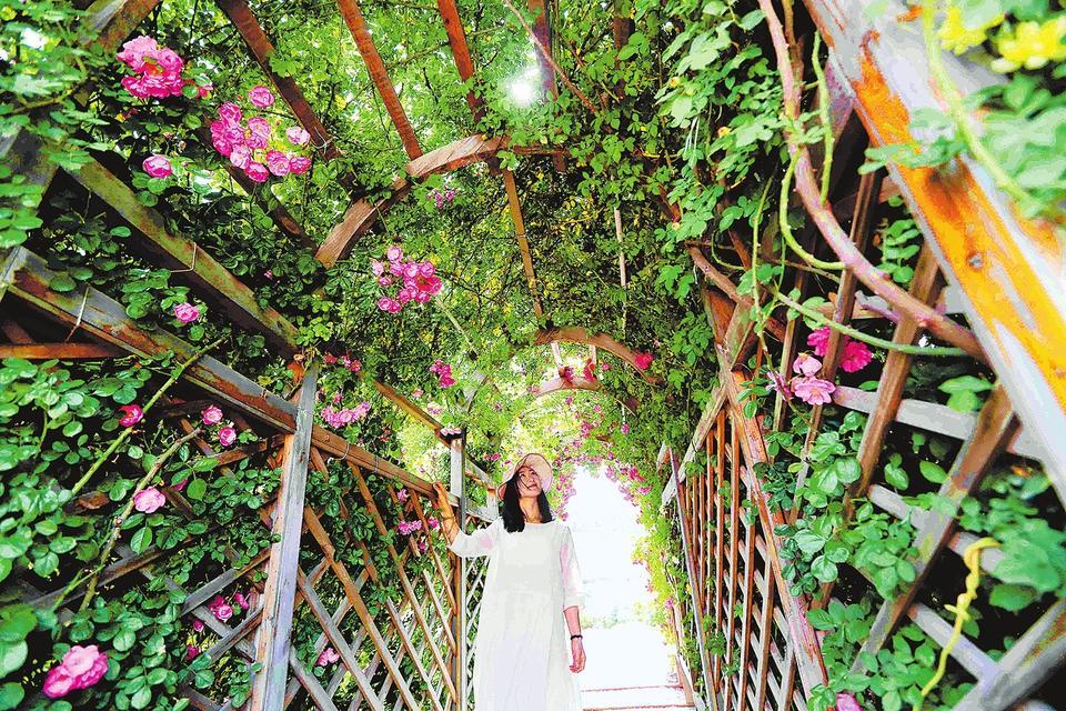 5月14日,市民在郑州市第三苗圃赏花拍照。郑州第九届宿根花卉展正在此举行,参展花卉品种200多个,数量多达50万盆,其间还将举行品种展示、专家讲座等活动。据悉,本次花卉展将免费向市民开放至本月30日。 记者 邓放 摄