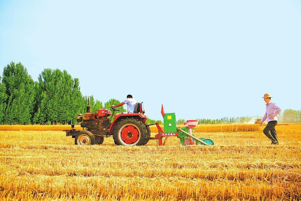 """6月11日,清丰县马村乡尚村村民在耕种玉米。""""三夏""""期间,该县在加快夏收进度、确保颗粒归仓的同时,通过加强技术指导、科学调配农机、保障农资供给等举措,及时推动夏种、夏管工作,确保""""三夏""""生产顺利开展。王世冰 摄"""