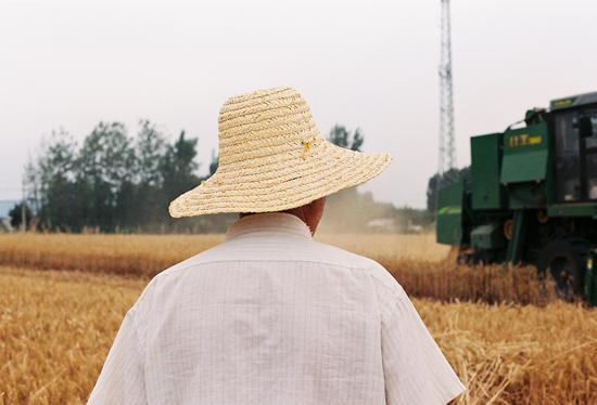 2019年6月,河南驻马店出山镇焦之纲村,父亲焦金安在地里收小麦。