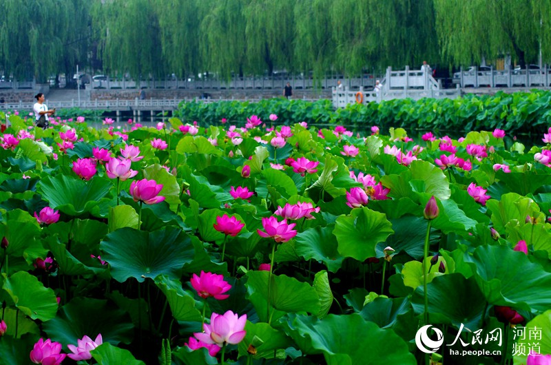 许昌已成为全国第二个、河南省首个通过国家水生态文明城市建设试点验收城市,生态宜居已成为许昌一张靓丽的名片。