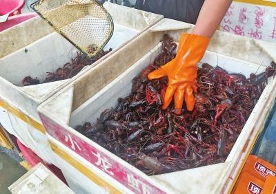 实现小龙虾自由 郑州小龙虾批发价较去年暴跌35%左右