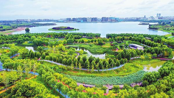 9月16日,郑州市郑东新区北龙湖湿地公园风景宜人。该公园位于北龙湖滨水区西北角,总面积16.4万平方米,有缤纷花海区、湿地体验区等五大功能区,是郑州市区最大的人工湿地,公园通过构建完善的水生态系统,保持了生态结构的完整性。记者 聂冬晗  摄