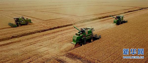 在河南省黄泛区农场九分场的麦田里,农民操作大型收割机收获小麦(2018年6月4日无人机拍摄)。  新华社记者 李安 摄