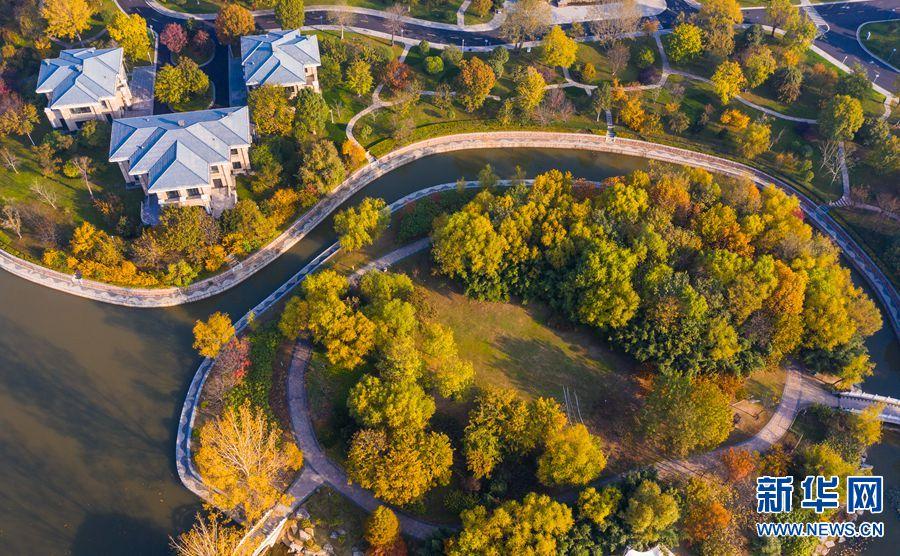 11月12日,平顶山市白龟湖国家湿地公园,秋意正浓。该公园位于白龟山水库北岸,规划区面积673.31公顷。拥有多样的地貌,生态环境良好,是北方城市不可多得的宝贵自然资源。湿地公园内动植物资源丰富,是野生动植物繁衍生息的理想场所。新华网发(郭东伟 摄)