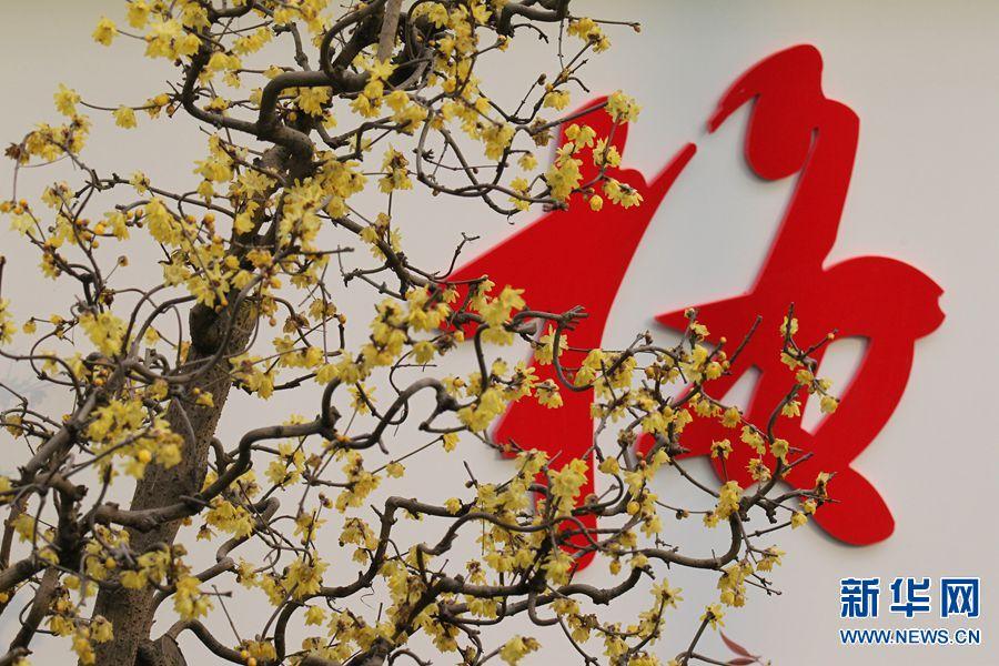 1月4日,第九届中国·鄢陵蜡梅梅花文化节蜡梅插花艺术展现场。(牛书培 摄)